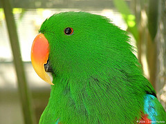 'Green Parrot' by Jannes Pockele